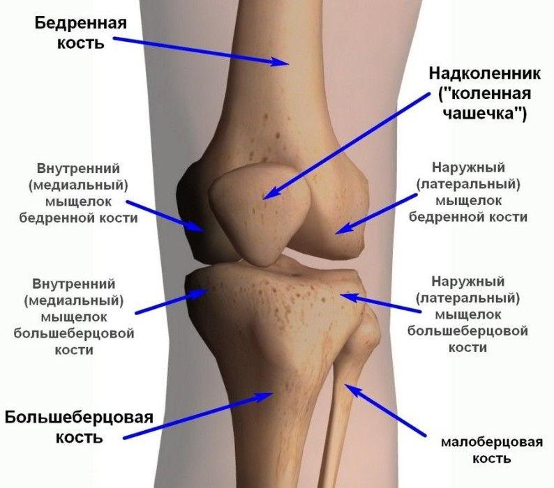 медиальный мыщелок большеберцовой кости фото