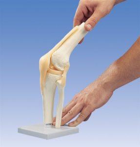 Механика коленного сустава