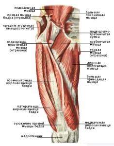 Передняя группа мышц бедра