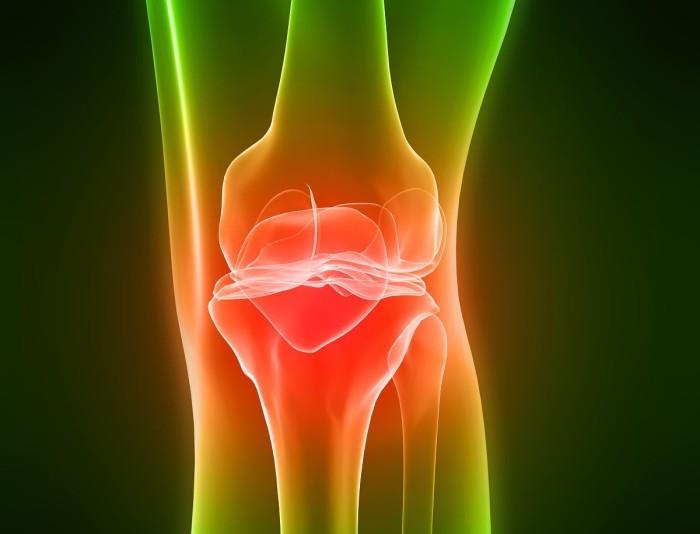 Анатомия человека коленный сустав